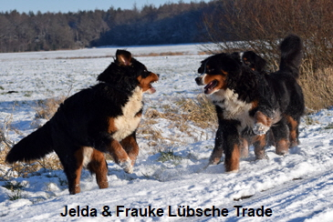 Jelda & Frauke Lübsche Trade