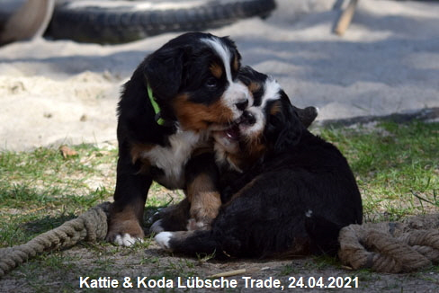 Kattie & Koda Lübsche Trade, 24.04.2021