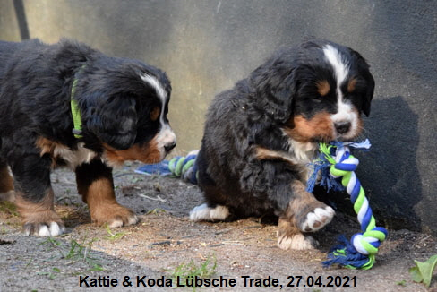 Kattie & Koda Lübsche Trade, 27.04.2021