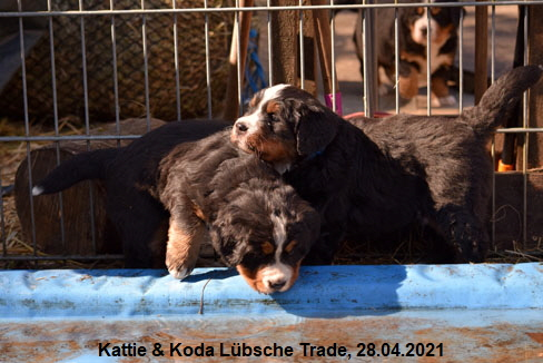 Kattie & Koda Lübsche Trade, 28.04.2021