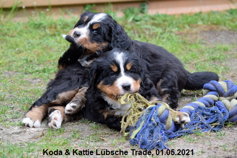 Koda & Kattie Lübsche Trade, 01.05.2021